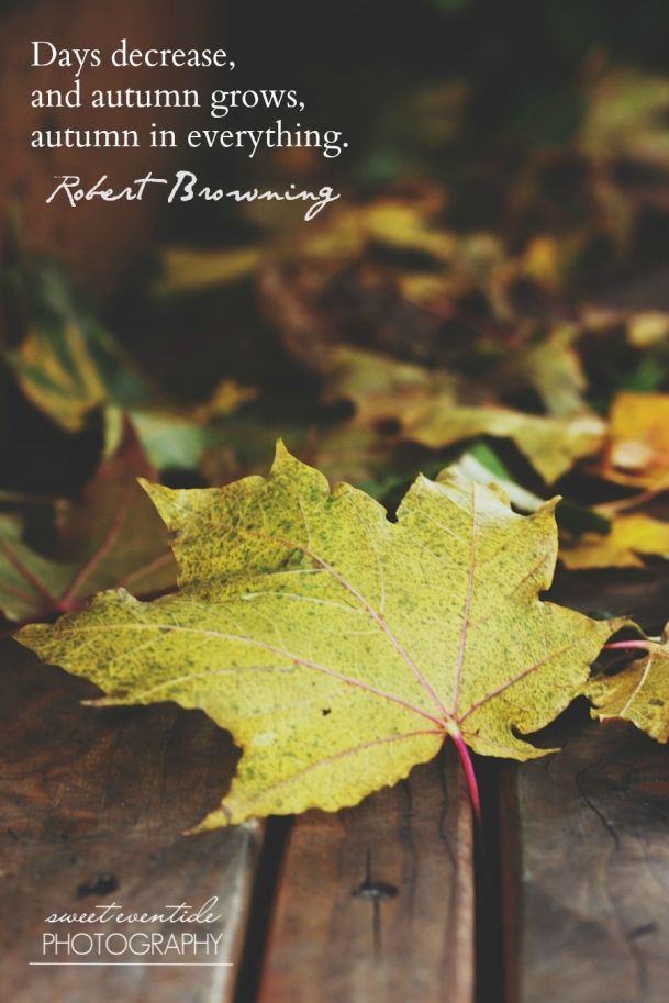 Quotes about Autumn Leaves 96 quotes