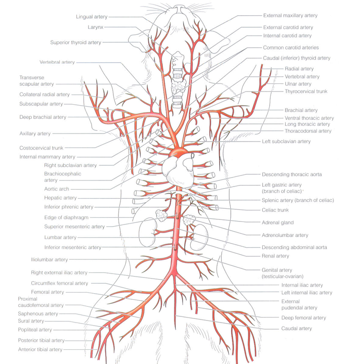 Quotes About Arteries 73 Quotes