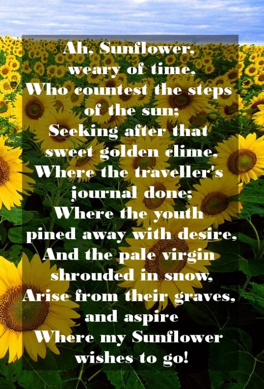 Quotes About Sunflower 50