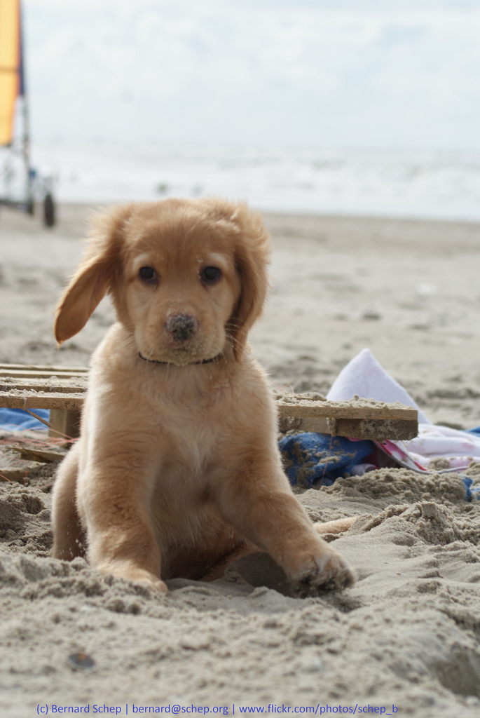 Quotes About Dogs And The Beach 25 Quotes