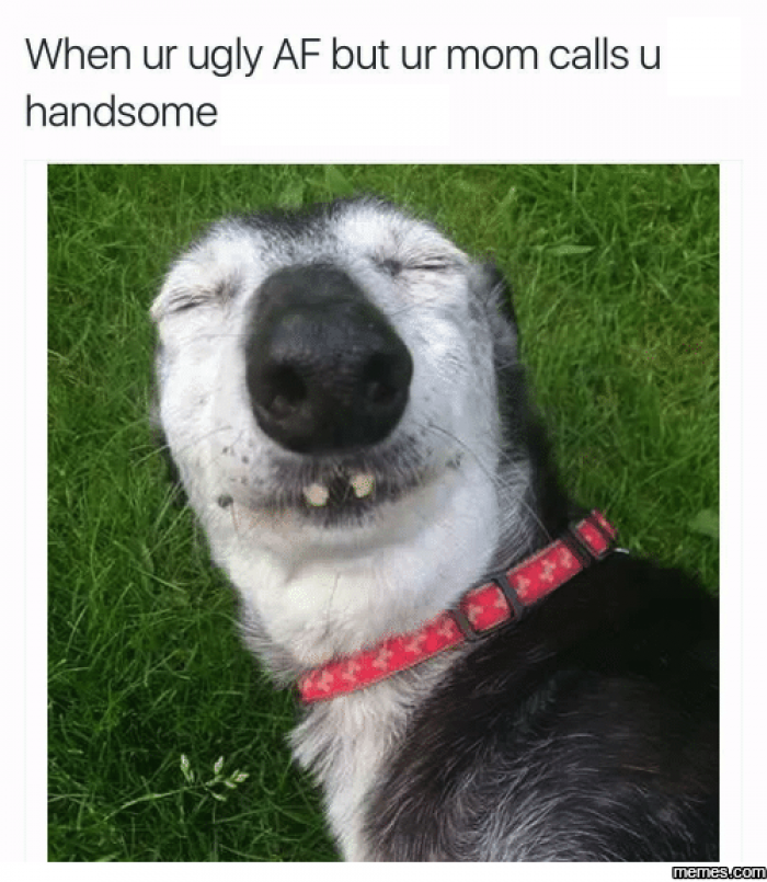 Quotes About Ugly Dogs 21 Quotes