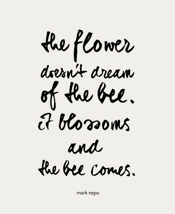 quotes about flower blossom quotes
