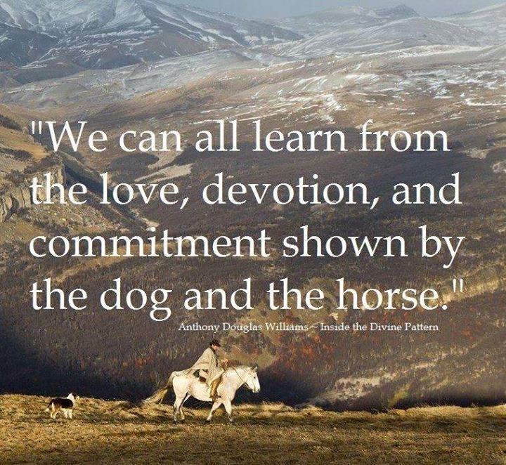 devotion and commitment Commitment shouldn't be something that should be practiced in a relationship commitment is different from devotion because of how it is similar to when a person signs a contract.
