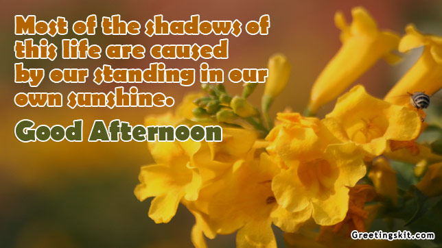 Quotes About Afternoon And Love 38 Quotes