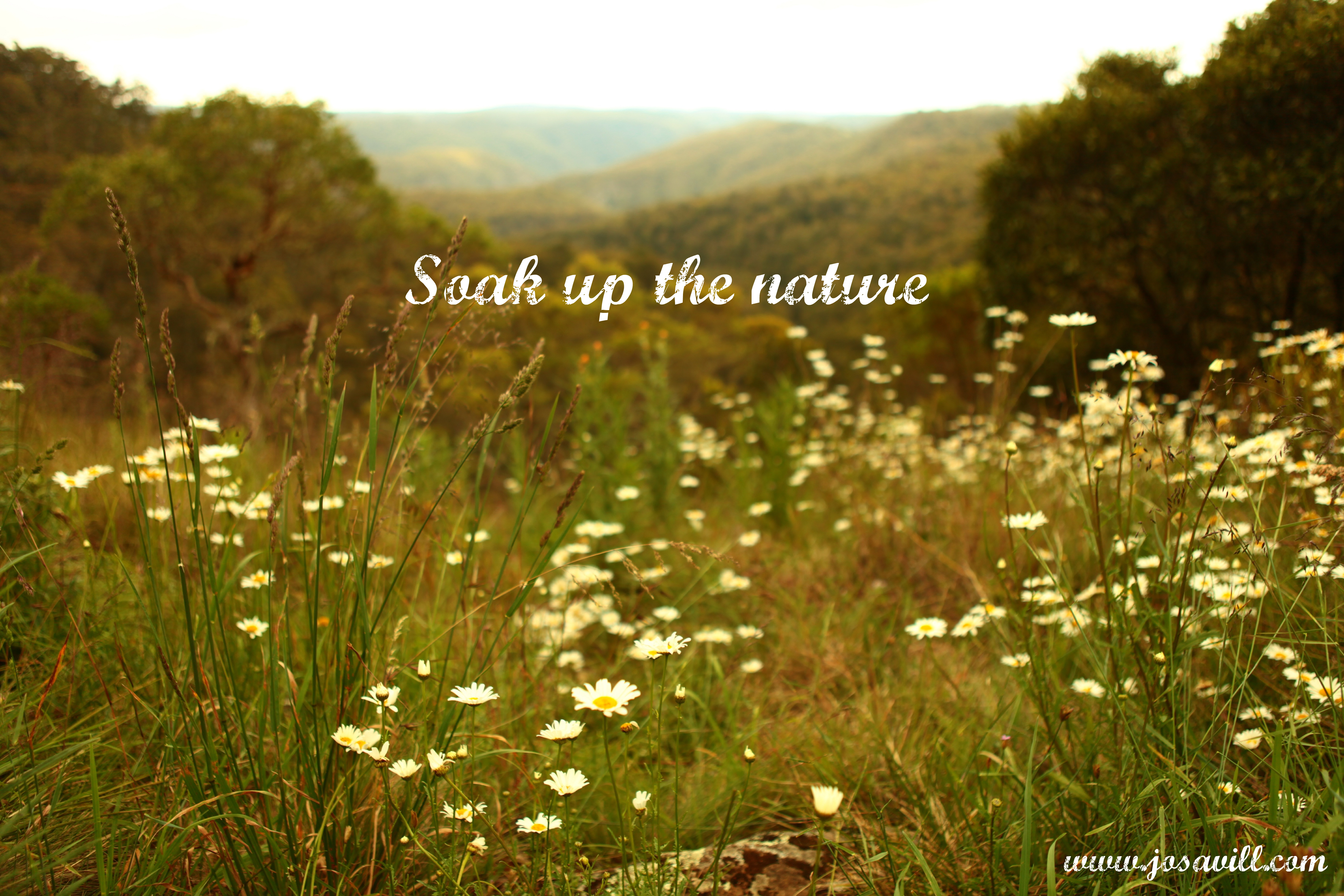 Quotes About Nature S Beauty 66 Quotes
