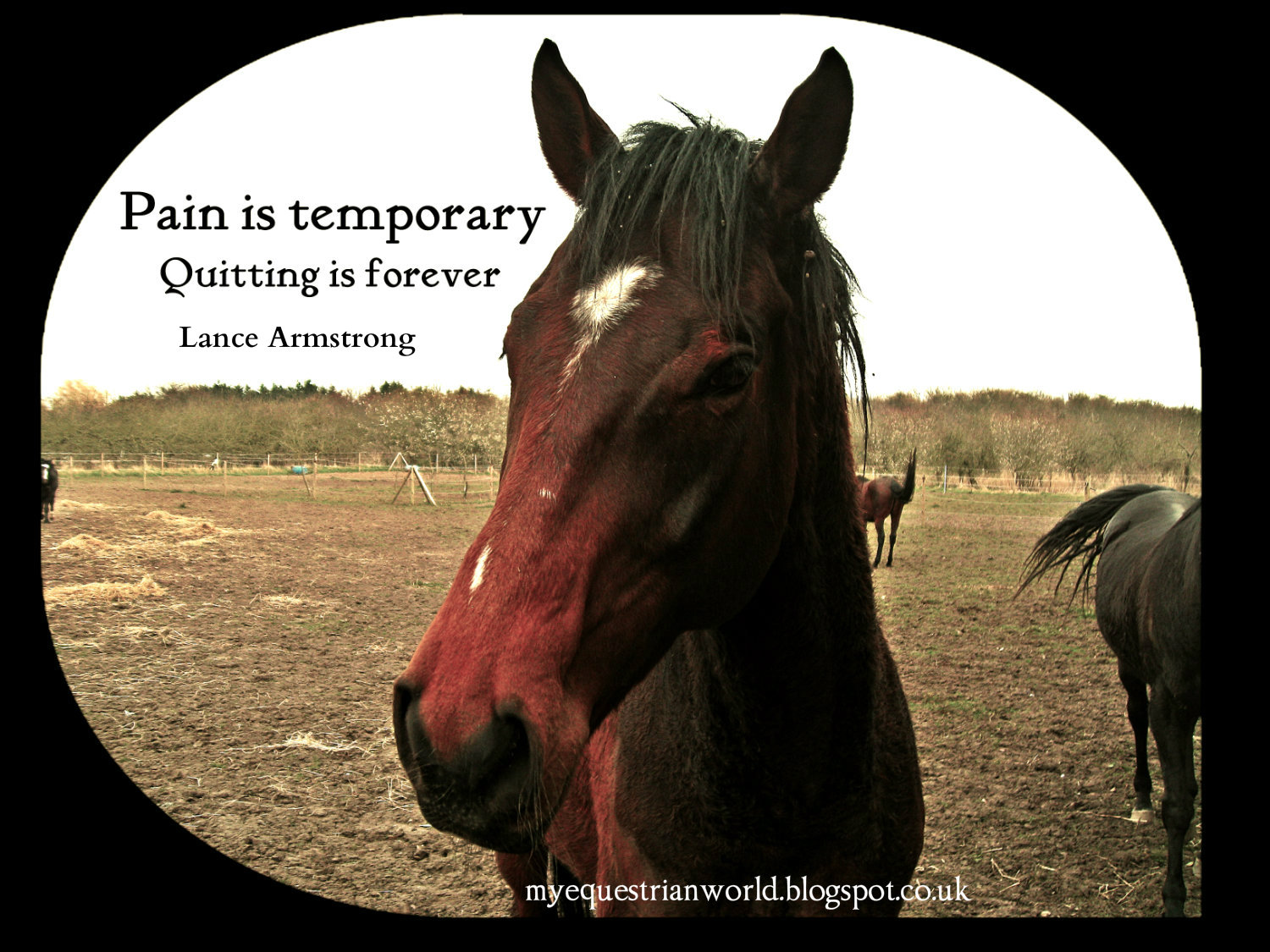 Quotes About Ride Horses 110 Quotes