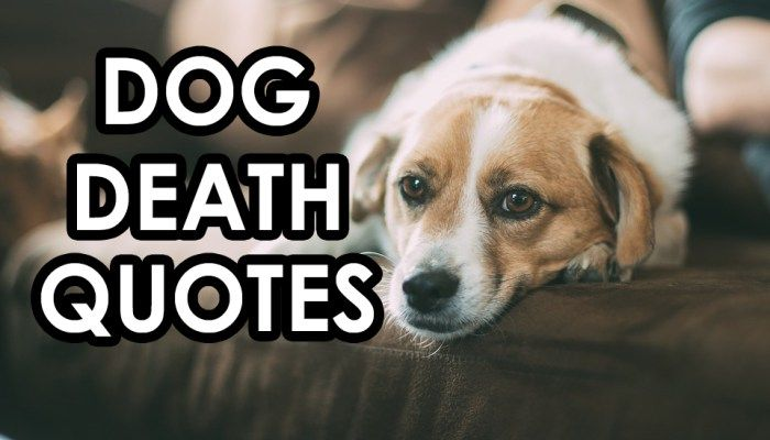 Quotes about Pet dogs dying (20 quotes)