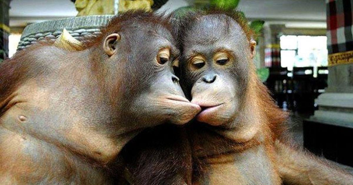 Открытки, картинки с поцелуями смешные