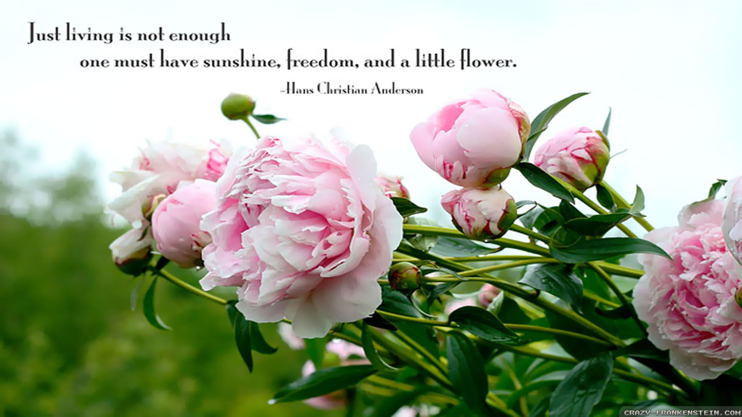 Quotes about spring flowers 108 quotes mightylinksfo