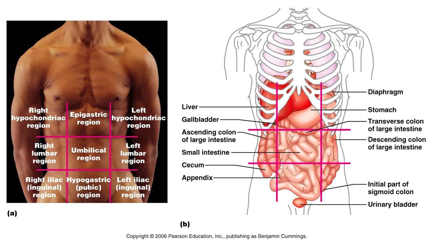 Quotes about Body organs (71 quotes)
