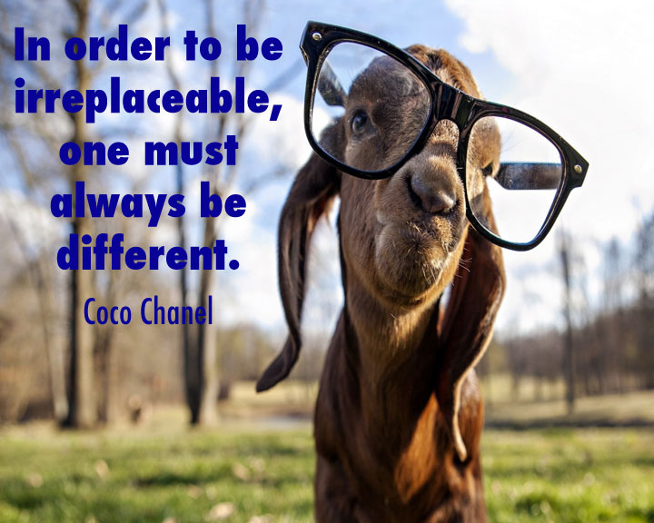 Quotes about Goats (105 quotes)