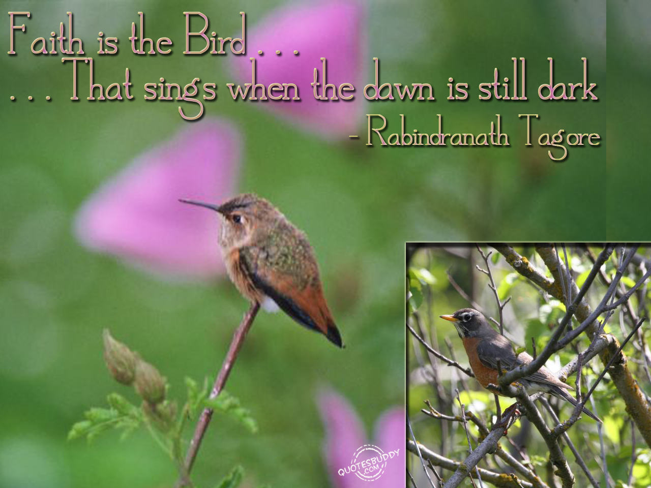 Quotes About Singing Birds 55 Quotes