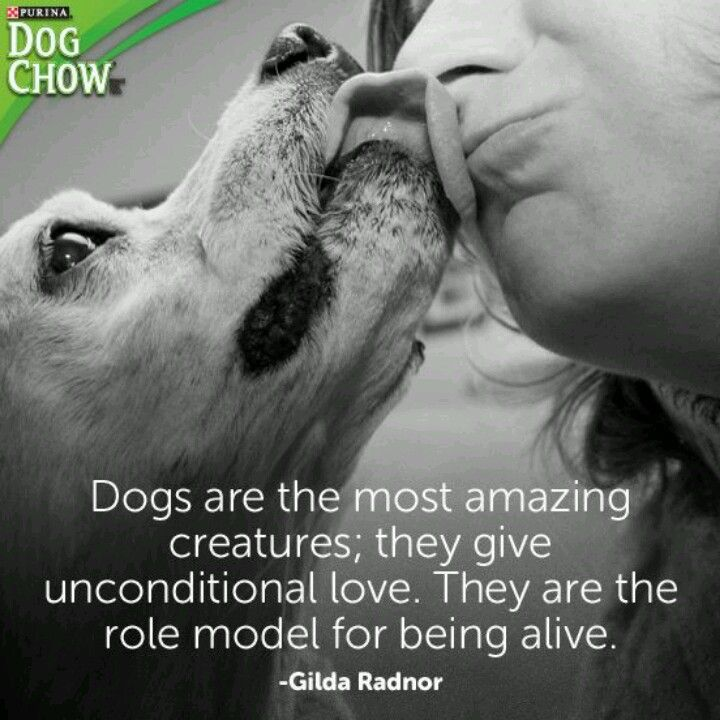 Quotes About Dog Love
