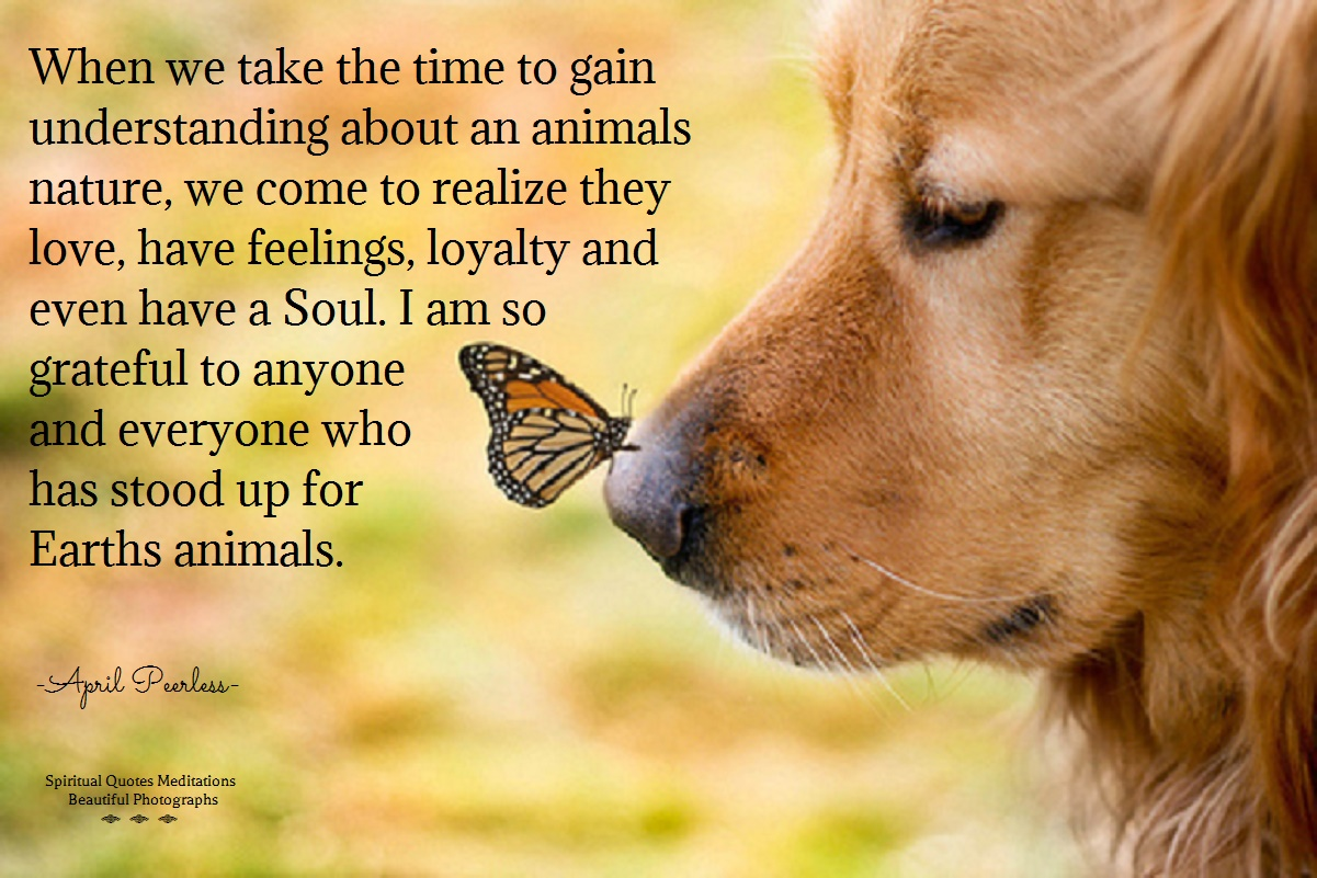 Quotes about Men and animals (100 quotes)