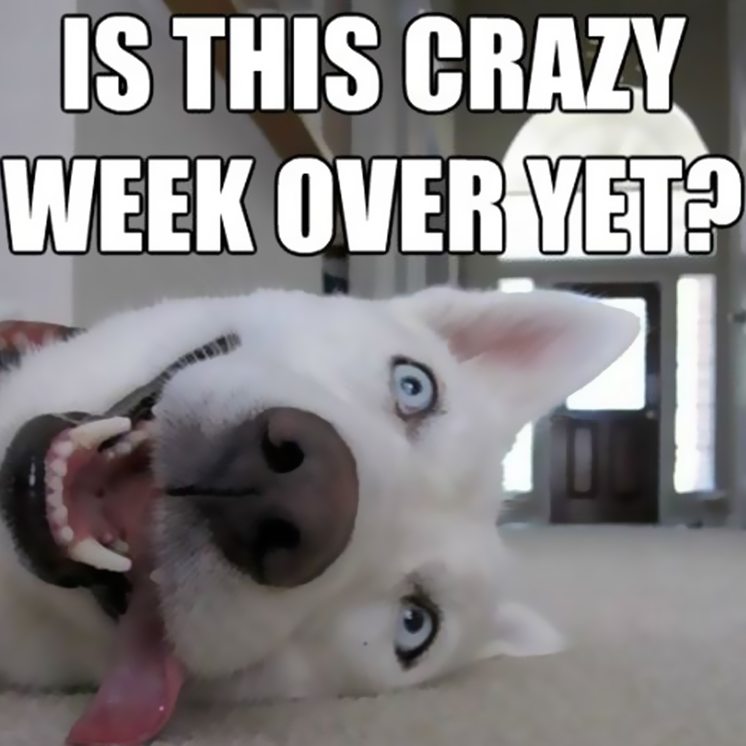 Quotes about Crazy week (48 quotes)