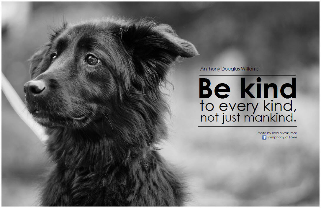 Quotes About Being Kind To Animals 29 Quotes