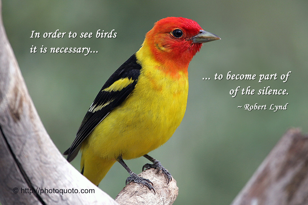 Quotes About Birds 676 Quotes