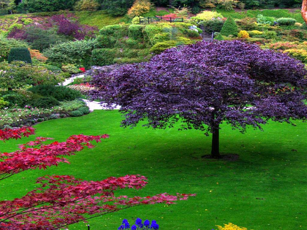 Quotes about beautiful gardens 81 quotes izmirmasajfo