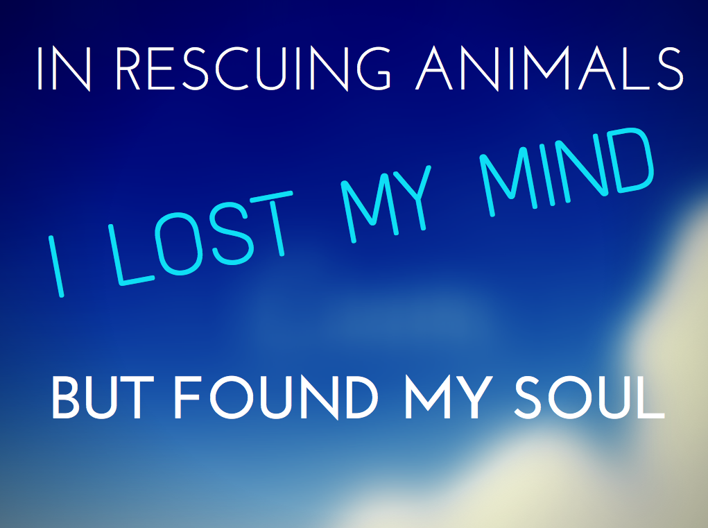 Quotes about Animal rescue (46 quotes)