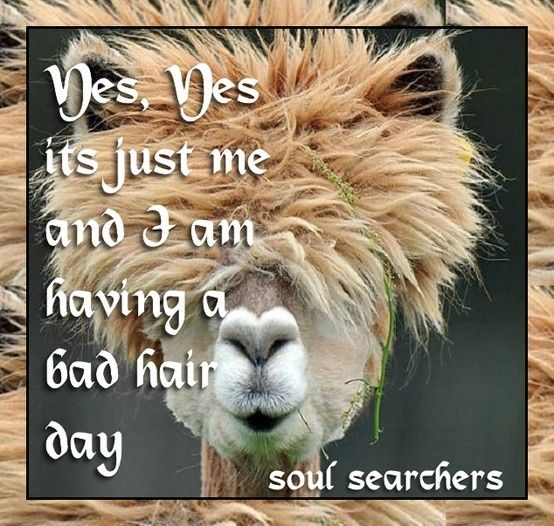 Quotes about Bad Hair Day (49 quotes)