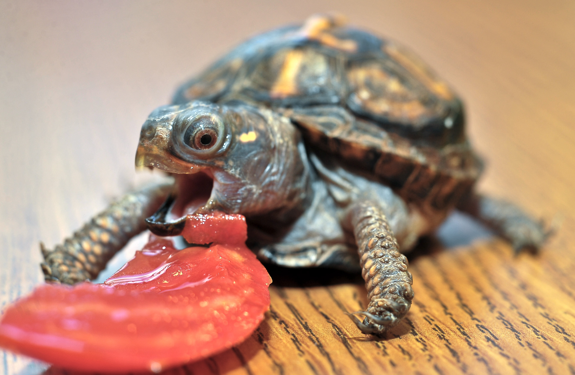 Quotes About Pet Turtles 28 Quotes