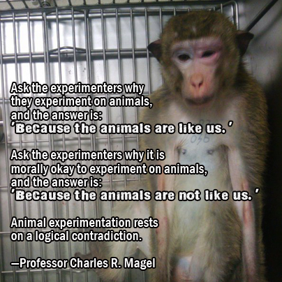 animal experimentation is it necessary The use of animals in experiments at leading federally-funded labs has increased nearly 73 percent in the past 15 years, according to a new study conducted by people for the ethical treatment of.