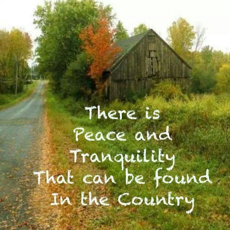 essay country living
