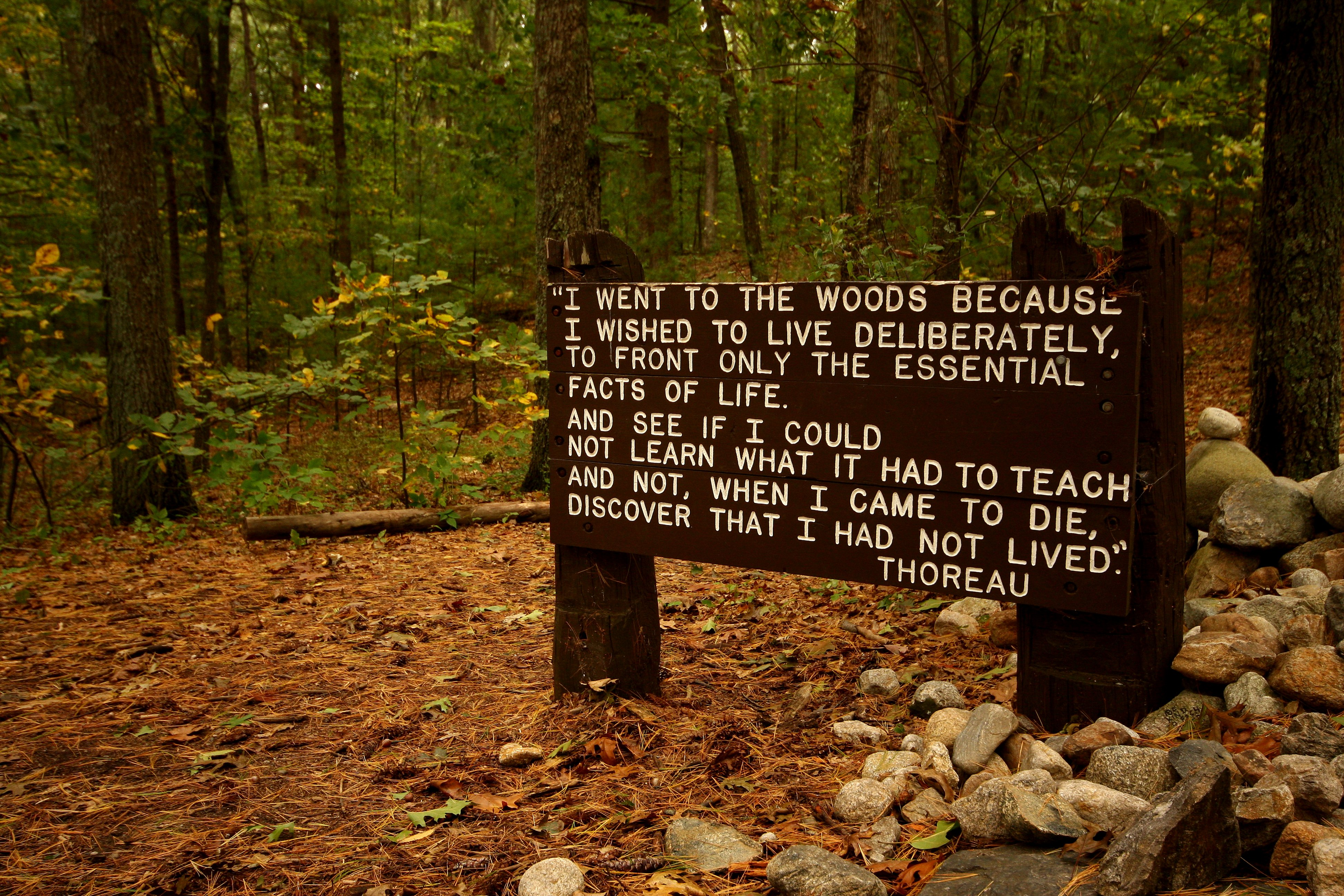 Quotes About Cabin 119 Quotes