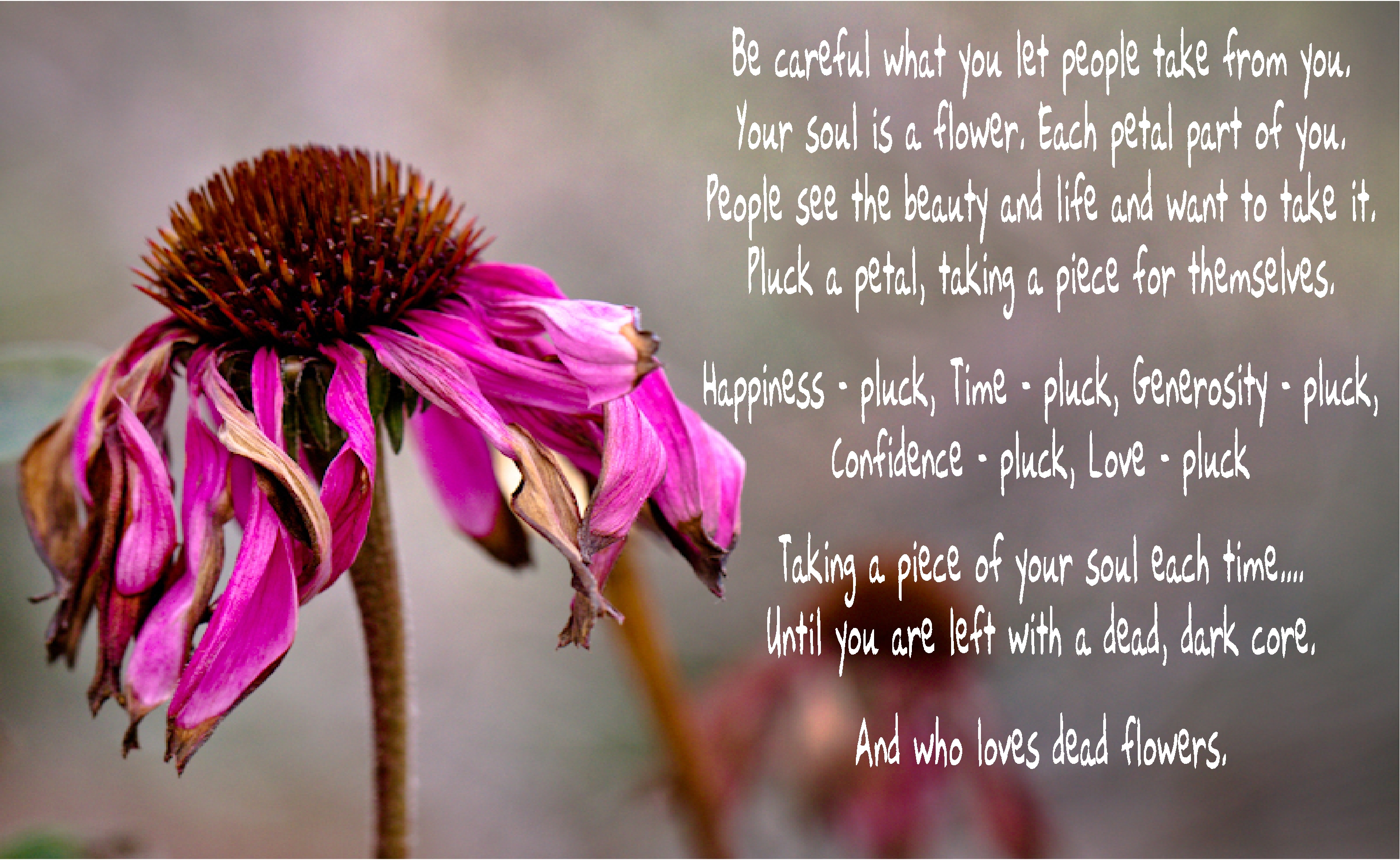 Quotes About Picking Flowers 26 Quotes