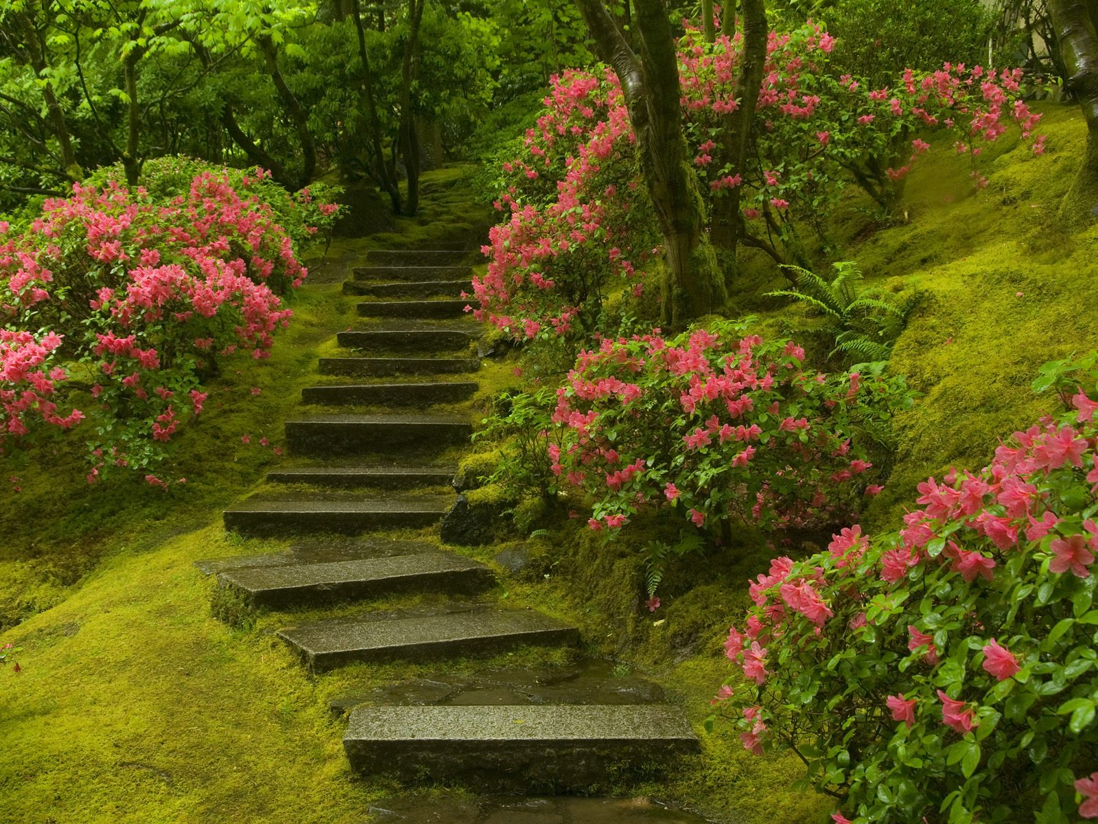 Quotes about Japanese garden (16 quotes)