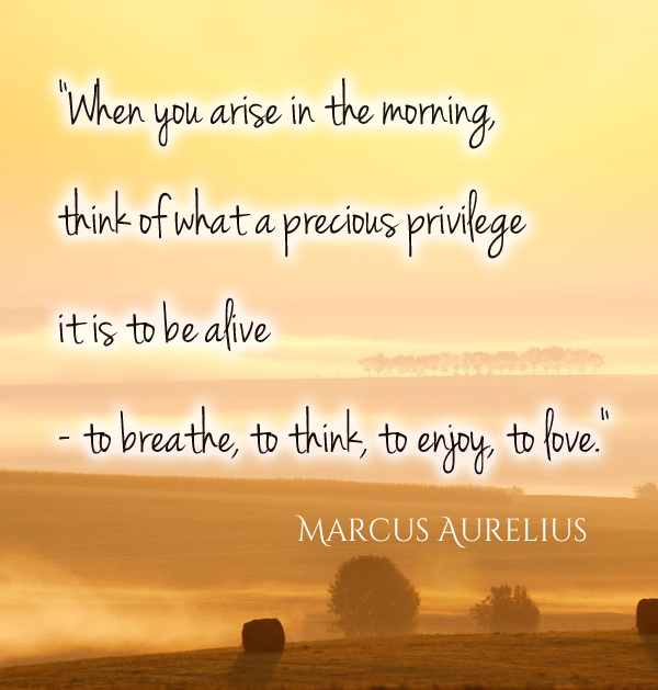 Quotes About Up Early 282 Quotes