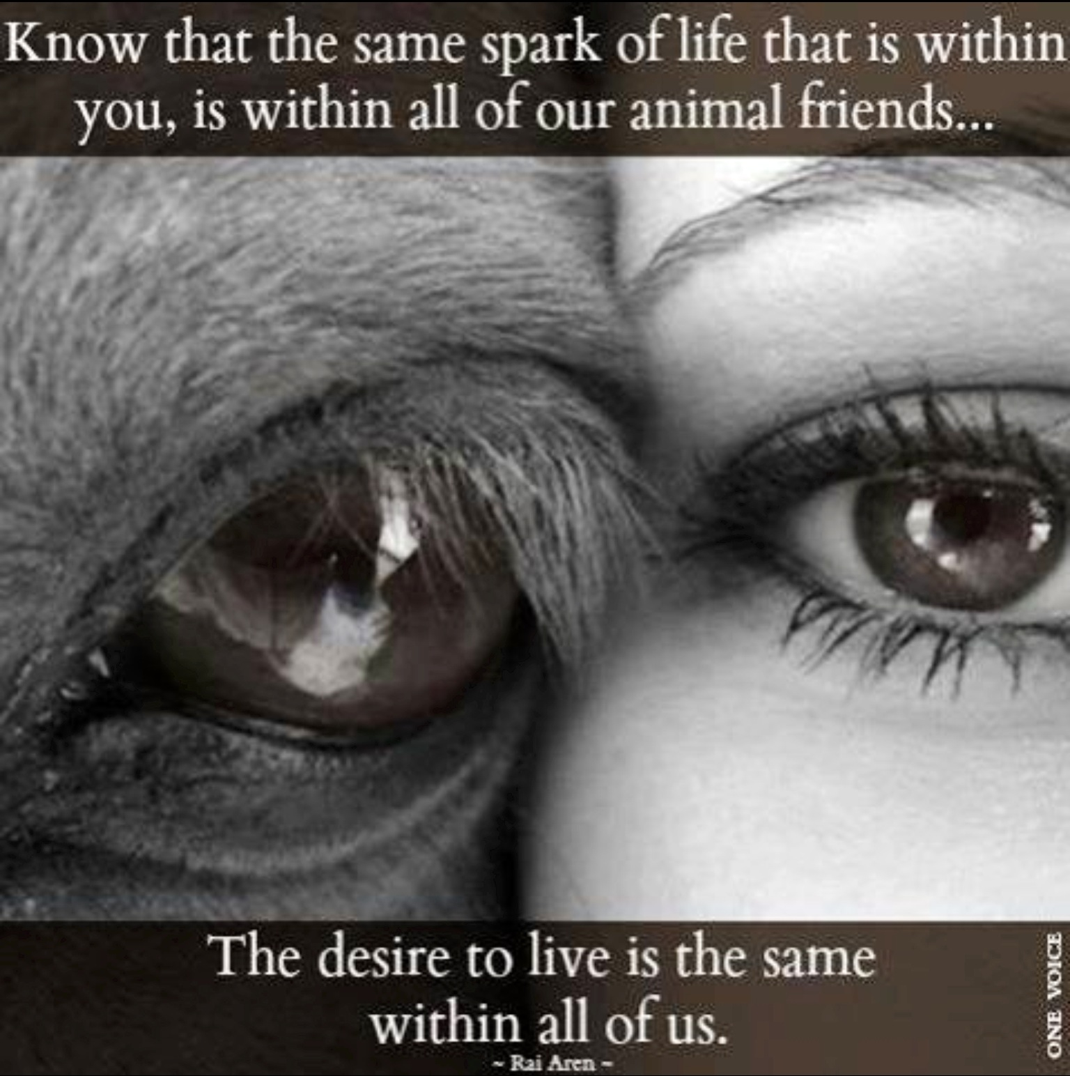 Quotes About Caged Animal 42 Quotes