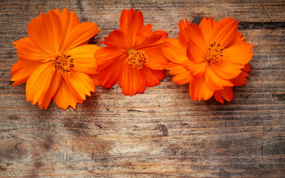 Quotes About Orange Flowers 26 Quotes