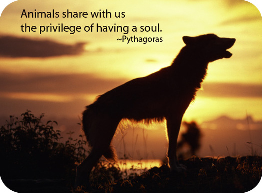 Quotes about Animal totems (27 quotes)