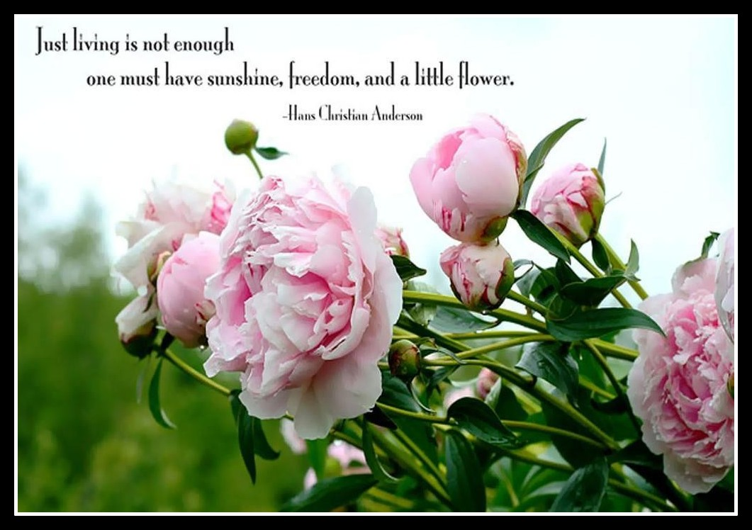 Quotes about beautiful flowers 90 quotes izmirmasajfo Choice Image