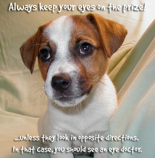 Quotes about Cute dogs (26 quotes)