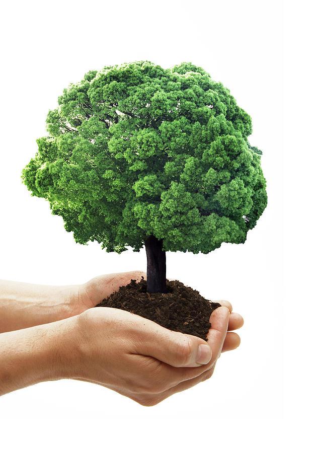 """Résultat de recherche d'images pour """"growing tree"""""""