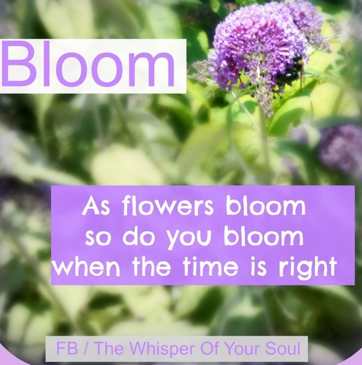 Quotes About Flowers Blooming Classy Quotes About Blooming Flower 48