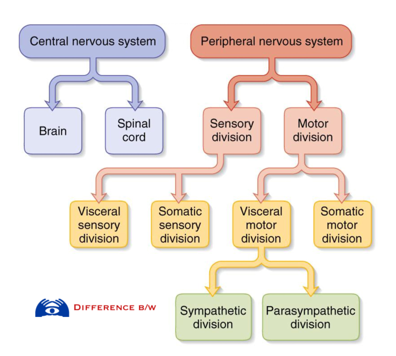 Quotes About Central Nervous System 47 Quotes