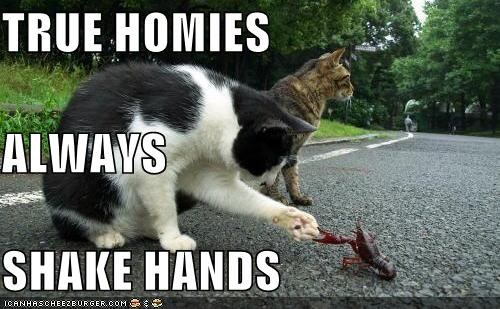 Quotes about Real homies (24 quotes)