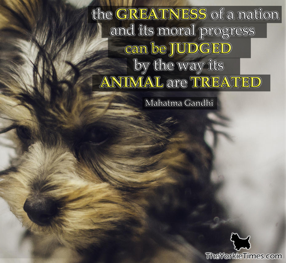 What animals can treat
