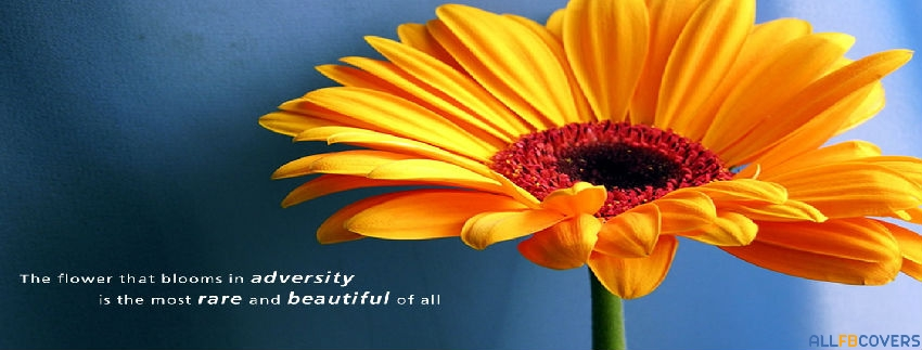 quotes about blooming 95 quotes
