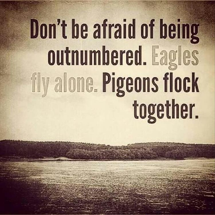 Quotes About Flock 156 Quotes