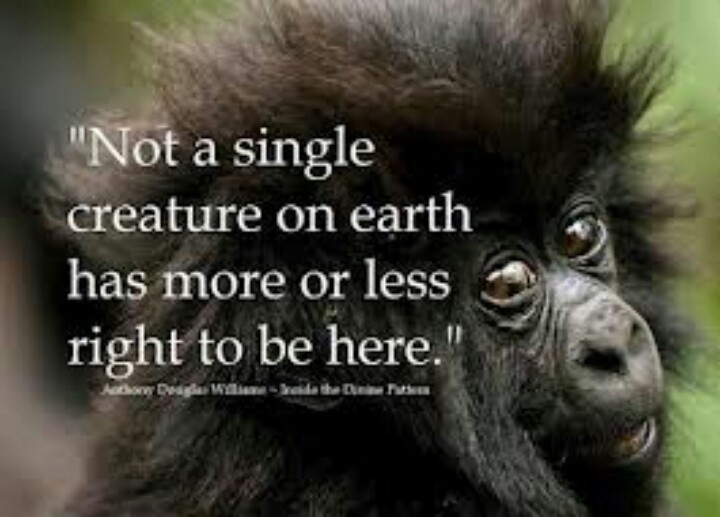 Quotes About Endangered Animals (30 Quotes