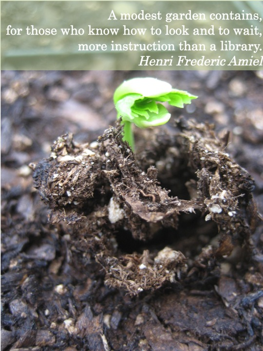 Quotes About Seeds 509 Quotes