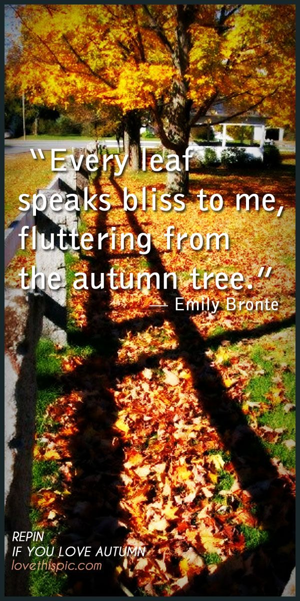 Quotes About Fall Leaves 86 Quotes
