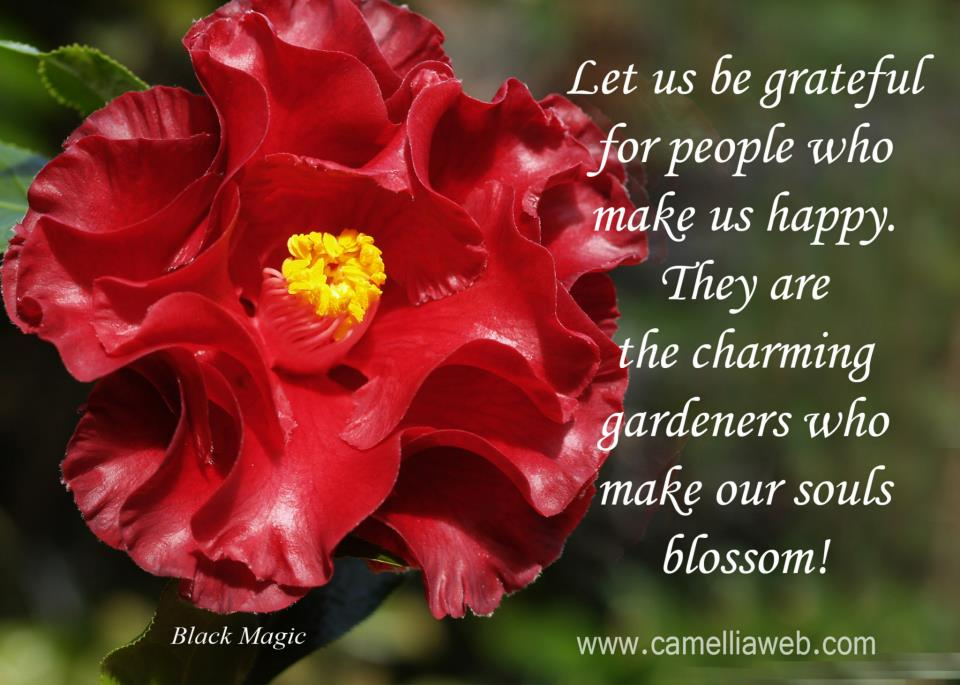 quotes about camellias quotes