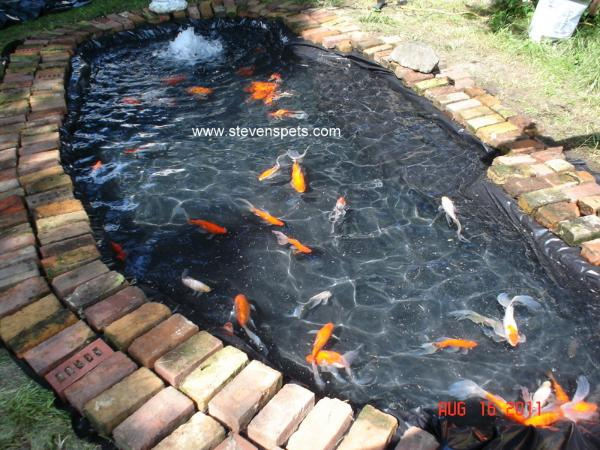 Quotes about fish in a pond 32 quotes for Homemade koi pond