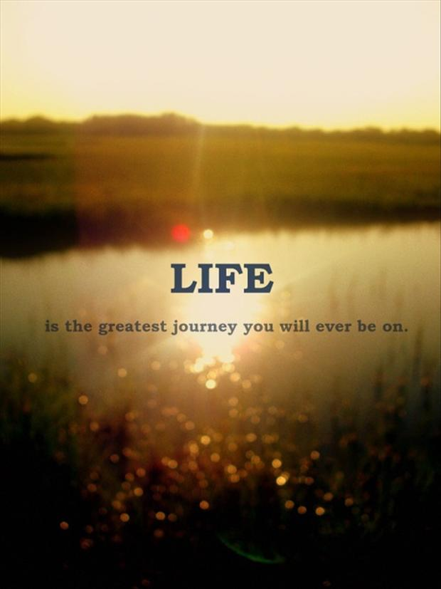 Quotes About Life Is Great 766 Quotes