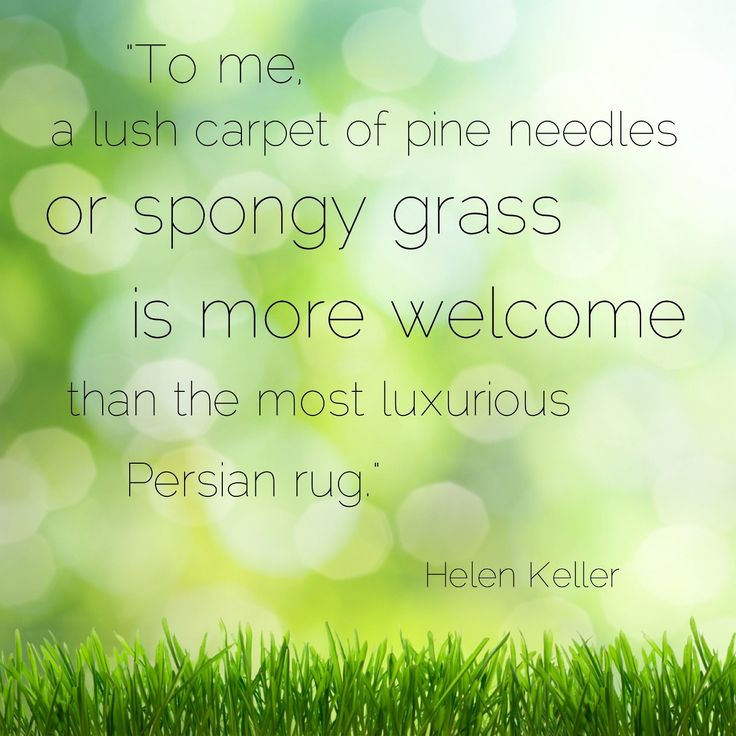 Quotes about Lawn care (23 quotes)